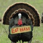 turkey-eat-ham-466x700