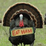 turkey-eat-ham-466x700