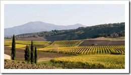 The Pelagrilli Vineyard of Siro Pacenti