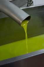 Freshly pressed olio nuovo (new oil)