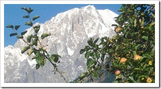 Ancient apples growing in the shadow of Mont Blanc
