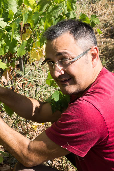 Arnaldo Rossi, winemaker at Pane e Vino in Cortona, tending his Sangiovese grapes in his'Dodo' vineyard
