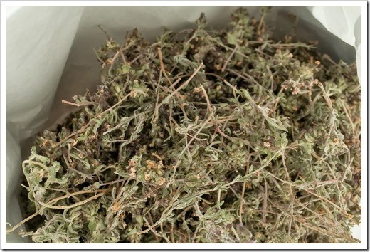 Sea thyme that Mauro Vergano uses in his Vermouth and Chinato aromatized wines