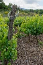 Girolamo Russo's Feudo vineyard near Randazzo, Siciily