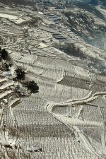 The Arpepe vineyards in winter