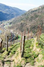 View from the Kuenhof vineyards in the Valle Isarco